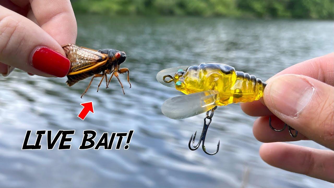 EXPERIMENT: LIVE Bait vs. ARTIFICIAL Lures!!! (Cicada Fishing)