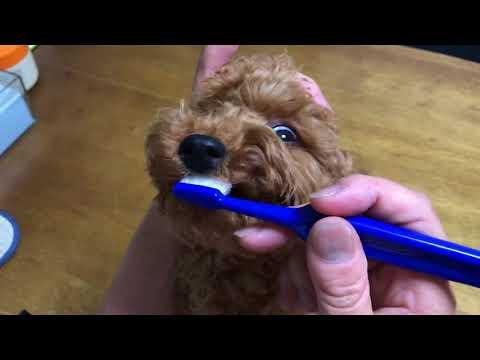 お泊りルカの初めての歯磨き