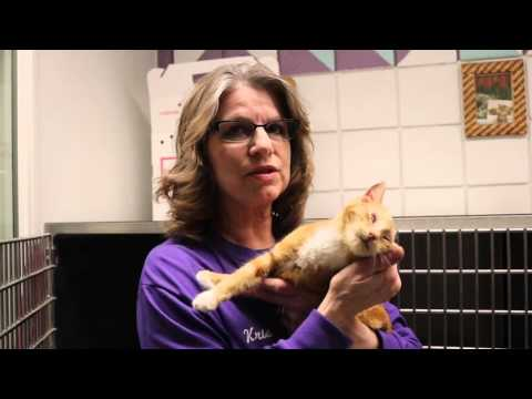 Niagara County SPCA Pet Nation Renovation #2