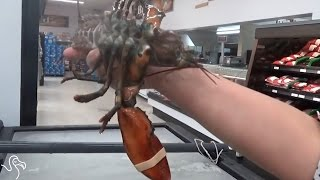 Woman Buys Lobster From Grocery To Send Him Back To The Ocean