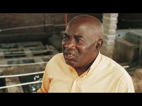 Coronavirus suffocates Malawi cichlid fish exports