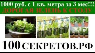 видео Выращивание зелени зимой: Бизнес на выращивании зелени