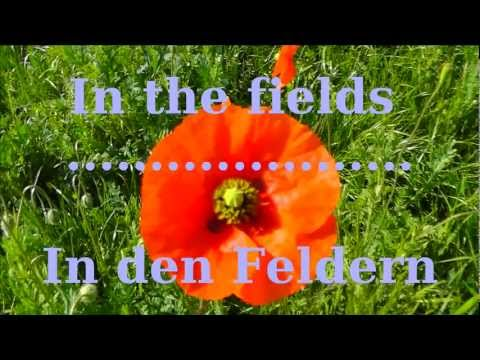 In the fields - In den Feldern - In Flanders Fields - Auf Flanderns Feldern, 1.Weltkrieg / WW1