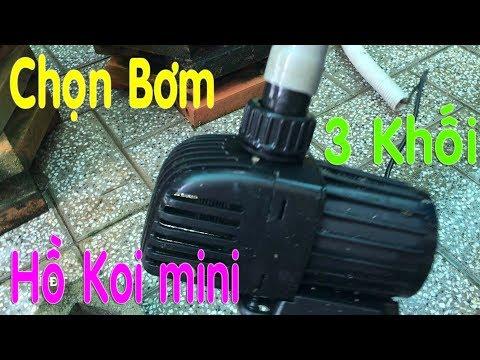 Hồ Koi mini ! Chọn Máy Bơm Cho Hồ 3 Khối 😍 Select the pump for koi pond 3000L