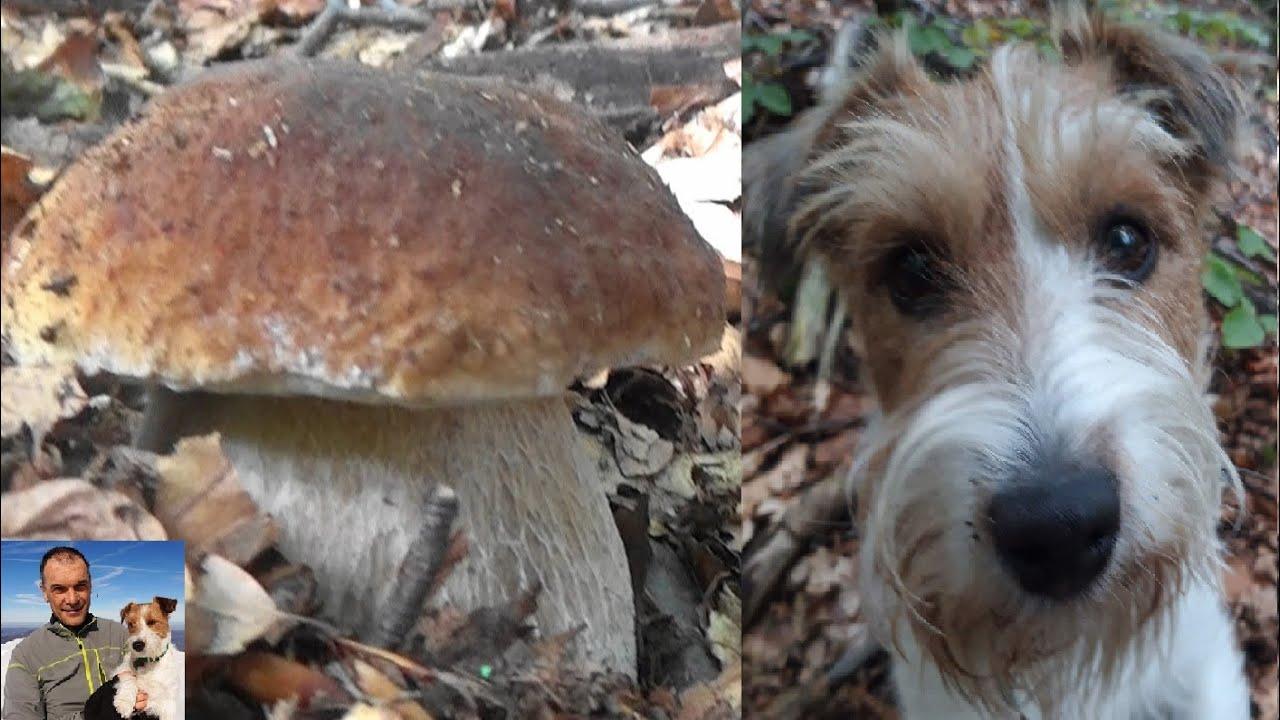 Io e Pedro vi accompagniamo nel paradiso dei funghi porcini - settembre 2020 - puntata 10°