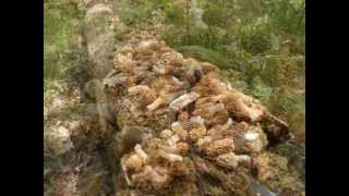 Epic Monster Morel Mushroom Motherlode 5/2/13
