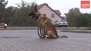 Pies BOHATER! Odnalazł w LESIE 4-letnie DZIECKO
