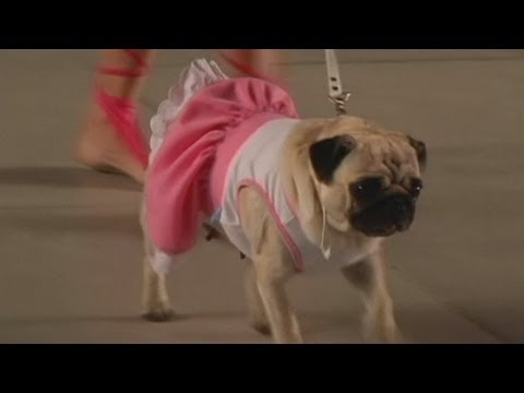 Dogs strut their stuff at fashion show in Argentina