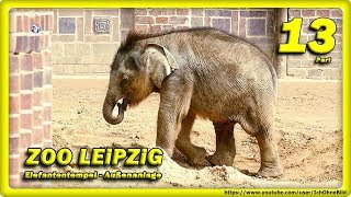 🔴 Don Chung, Rani & Elefantenkalb • Zoo Leipzig / Animals - Travel - слоновый
