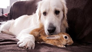 Dog and Rabbit - Best Friends Forever