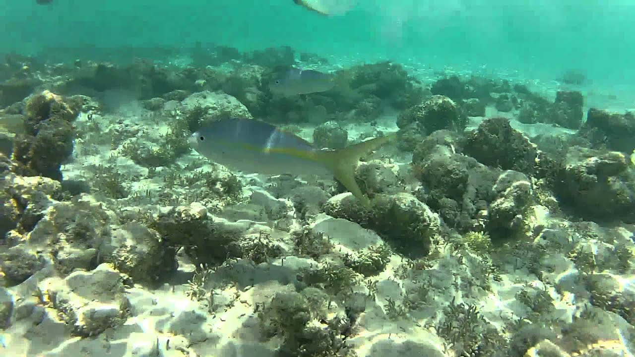 Snorkeling in Coral Gardens Reef Providenciales YouTube