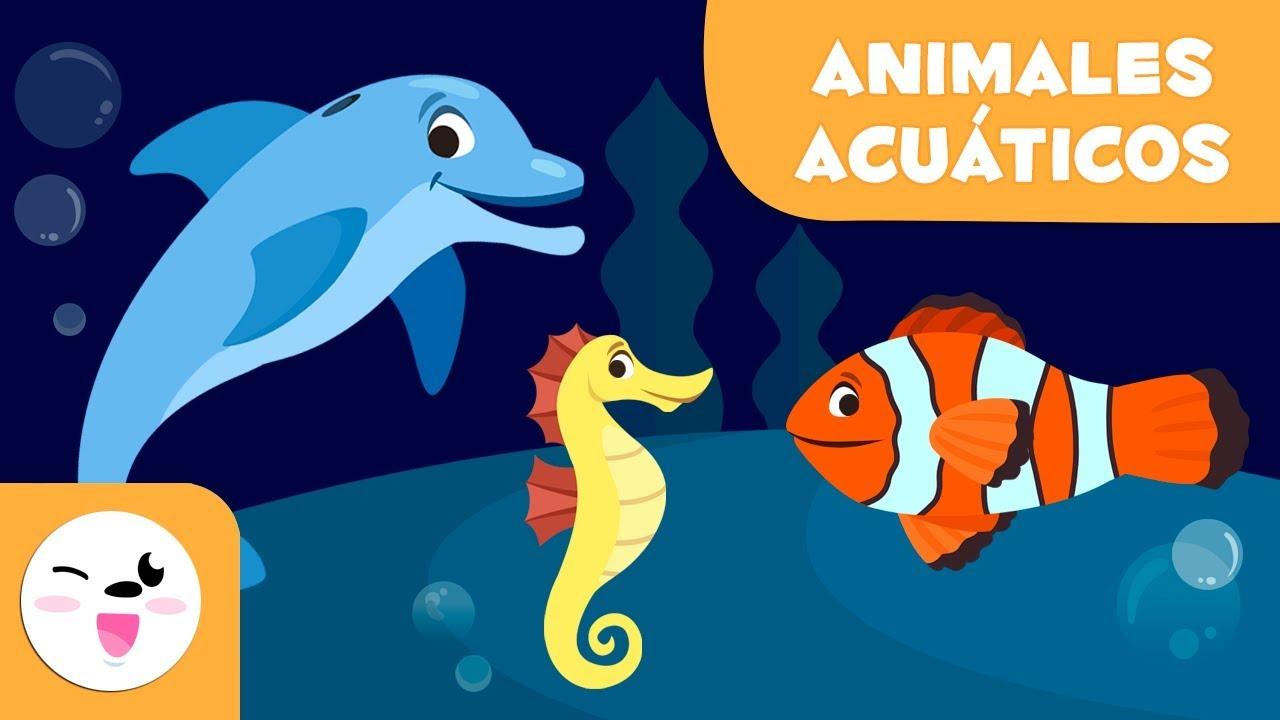 Los Animales Acuáticos Para Niños Vocabulario Para Niños Youtube