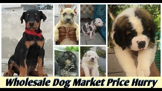 Wholesale Dog Market India / Dogs For Sale In India .