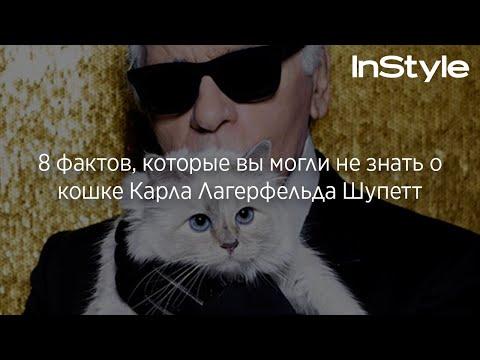 8 фактов, которые вы могли не знать о кошке Карла Лагерфельда Шупетт