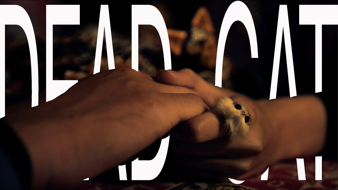 Dead Cat - 3 Minute Short Film MRR2020