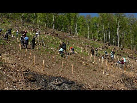 Мільйон дерев за 24 години: на Закарпатті підписали меморандум з партнерами «Озеленення України»