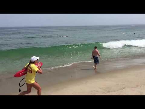 tiburon ataca una foca mientras dos surfistas logran escapar