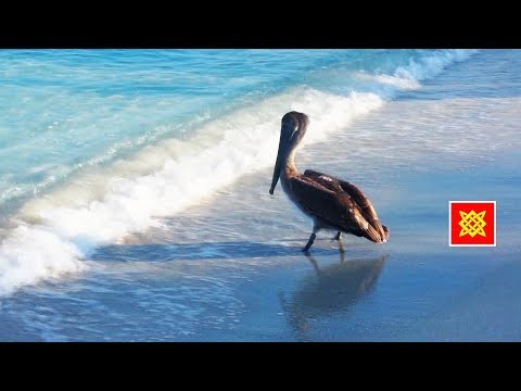 куба пляжи варадеро фото туристов