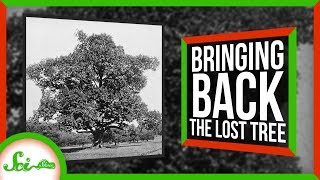 Bringing Back the Lost American Chestnut Tree