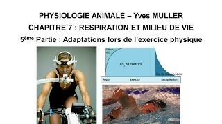 Chapitre 7-5 Activité musculaire et adaptations de l'organisme lors de l'exercice physique