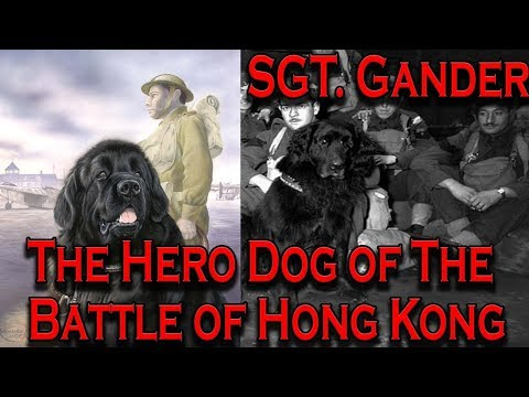 Gander: The Hero Dog of the Battle of Hong Kong