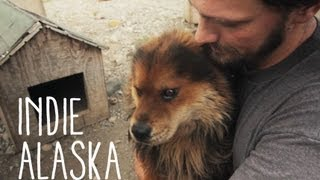 I Inherited a Sled Dog Team | INDIE ALASKA