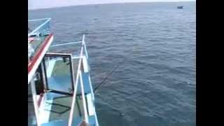 Рыбалка в Болгарии(июль 2012)(, 2012-11-08T15:44:06.000Z)