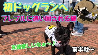 フレブル子犬タプさん生後189日目♪ 神戸フルーツフラワーパークのドック...