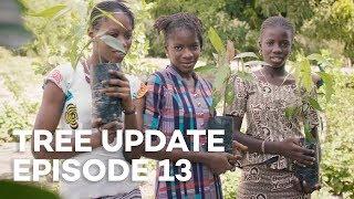 Tree Update Episode 13
