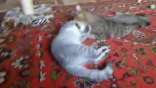 Коты любовь и нежность