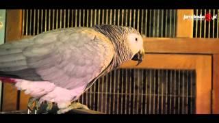 Zwierzęta mówią ludzkim głosem?