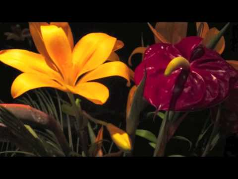 Dharmi® Journey - Yoga Retreat - Meditation - Adventure - Life Coaching - Training