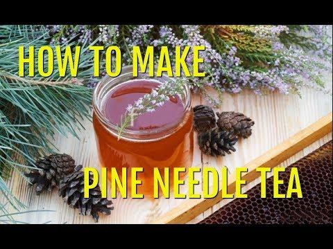 How to Identify and Make White Pine Needle Tea