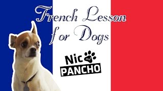 French Lesson For Dogs - Nic And Pancho
