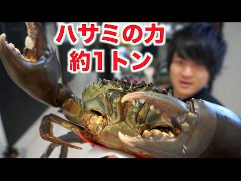 凶暴どうまん蟹をさばいたけどめっちゃ苦戦した・・・