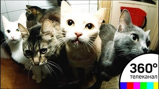 Пять кошек в одной квартире: жители многоэтажки в Зеленограде жалуются на соседку