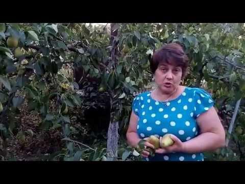 """Обалденная груша """"Лесная красавица"""""""