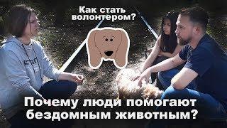 """Интервью с волонтерами приюта для животных """"Валента"""""""