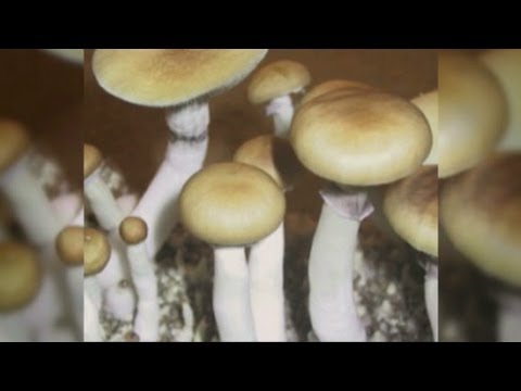 Psychedelic Drugs can help Cancer Patients?