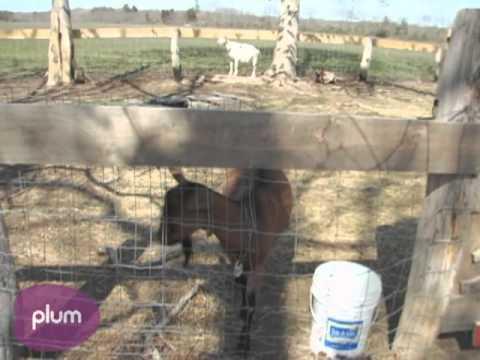 Edible Island: Local Lamb at Flatpoint Farm in Martha's Vineyard