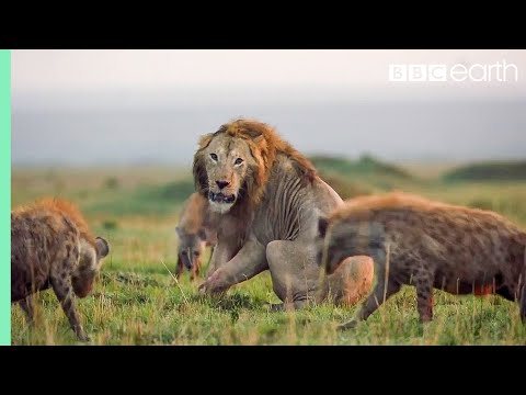 10 TOP Natural History Moments | BBC Earth
