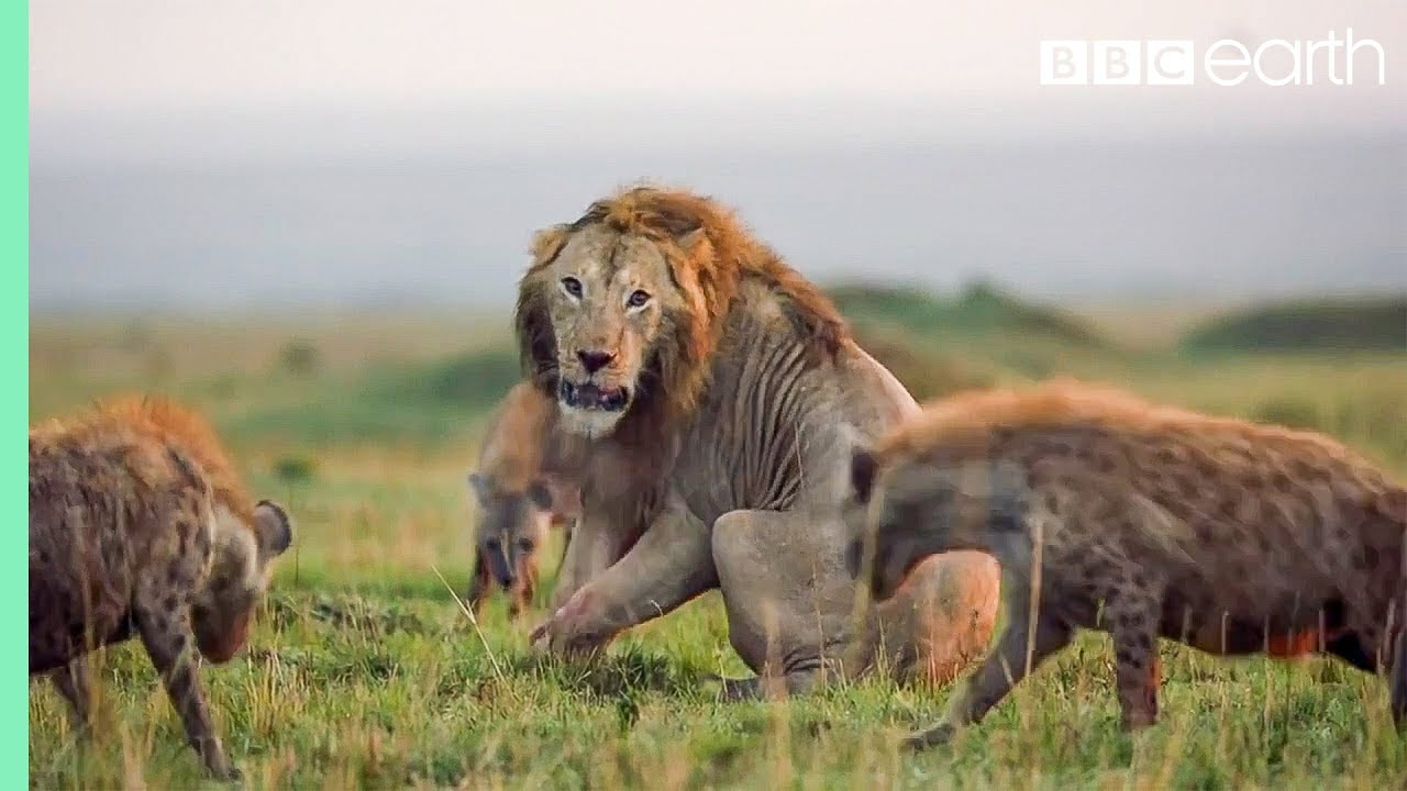 10 Natural History Moments