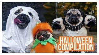 Pug Halloween Compilation  Doug The Pug
