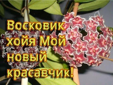 уют фото цветы