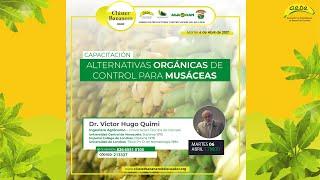 Alternativas Orgánicas de control para musáceas Dictado por el Dr. Victor Hugo Quimi.