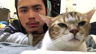 Детское видео Смех до слез Домашние животные - Сочные приколы (2019) МатроскинТВ