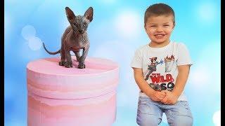 Лысый кот Макс Дети купили котёнка