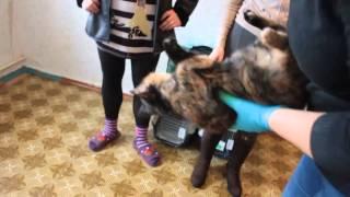 Стерилизованные кошки на передержке