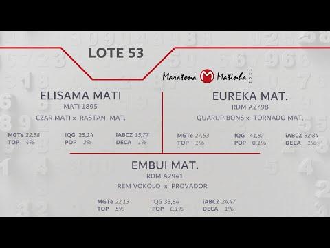 LOTE 53 Maratona Matinha