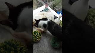 Funny Cats Happy new year!